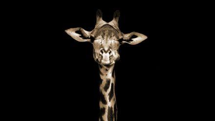 De giraffe schilderij