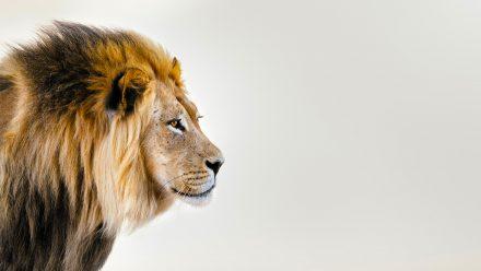 De Leeuw schilderij