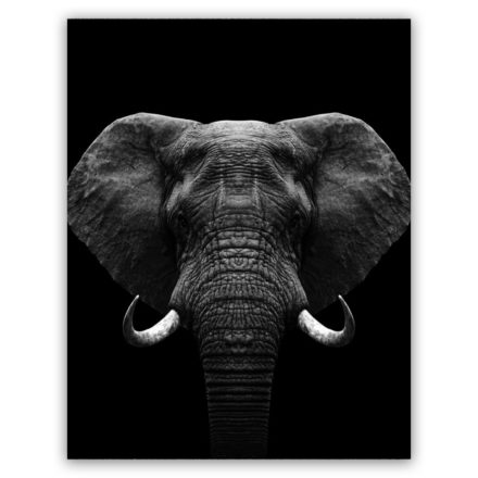 Zwart wit olifant schilderij